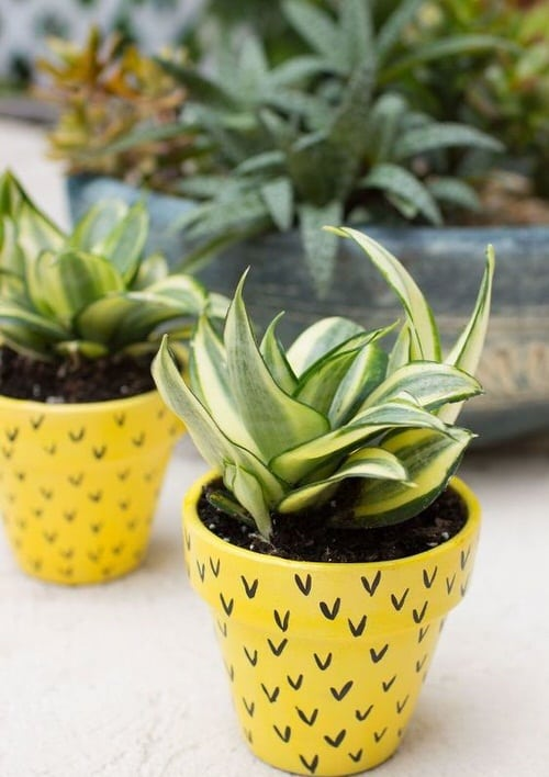DIY Houseplant Pots Ideas and Makeover 15