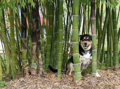 Plants that Dogs Love to Eat