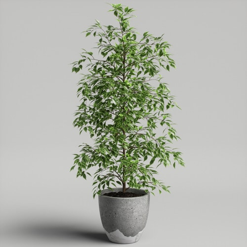 Indoor Plants for a Minimalist Home 4