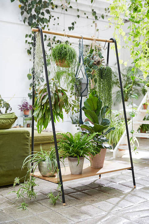 Best House Plants Home Pictures for Inspiration 4