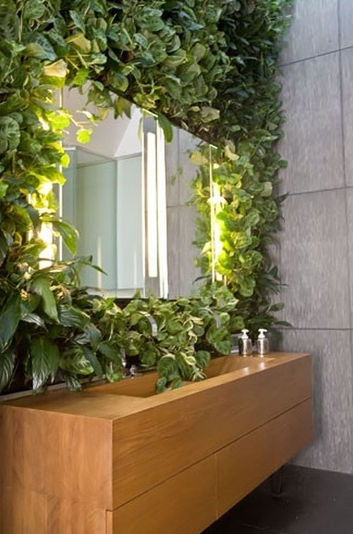 Best Plants for a Vertical Wall 4