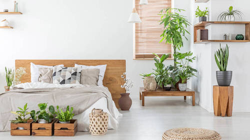 Apartment Decoration Ideas with Plants 5