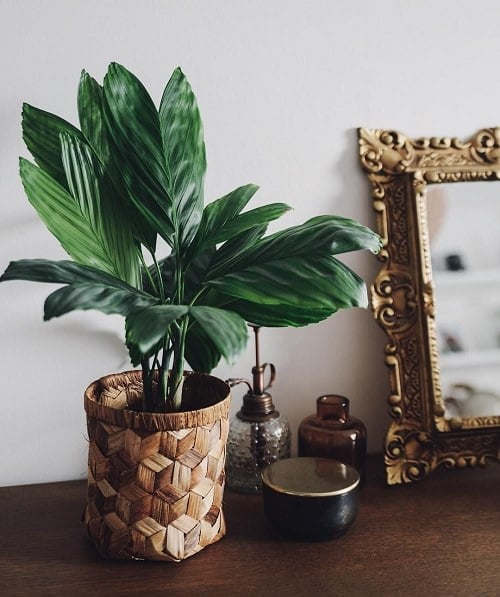 Metallic Sheen Indoor Plants 3
