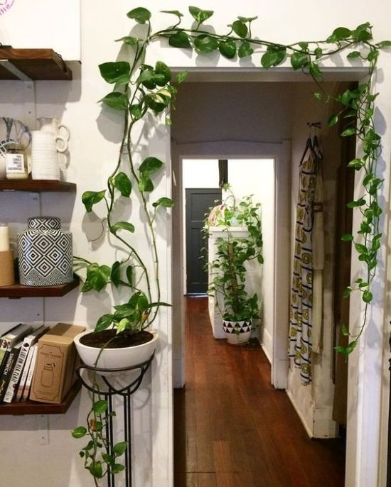 Apartment Decoration Ideas with Plants 8