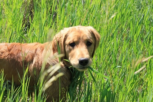 Plants that Dogs Love to Eat 5