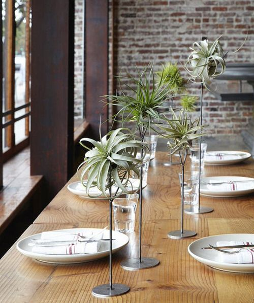 Best Indoor Plants for Dining Room