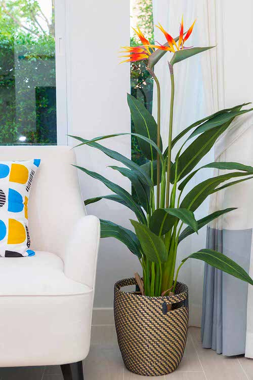 Bird of Paradise Types You Can Grow Indoors