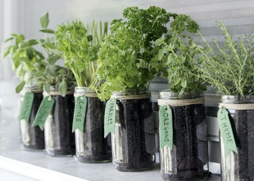 Indoor Plants You Can Grow in Glass Jars and Bottles