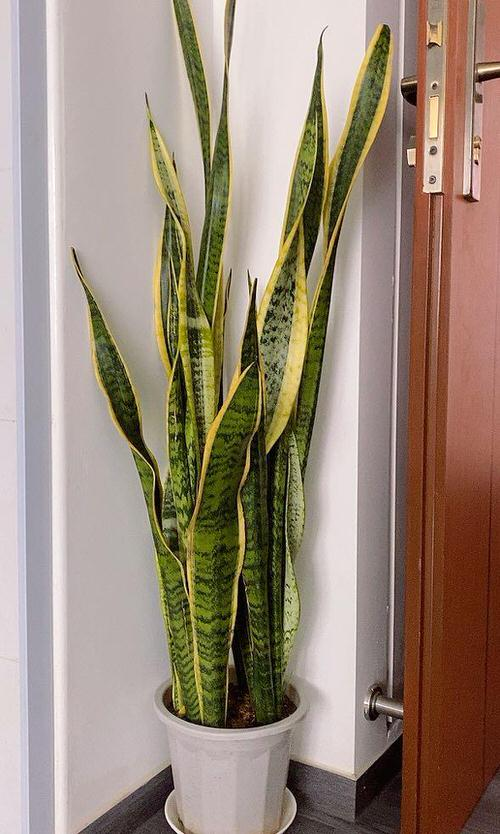 Best Tall Houseplants with Patterns