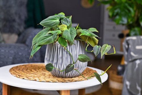 Pin Worthy Houseplant Pictures 18