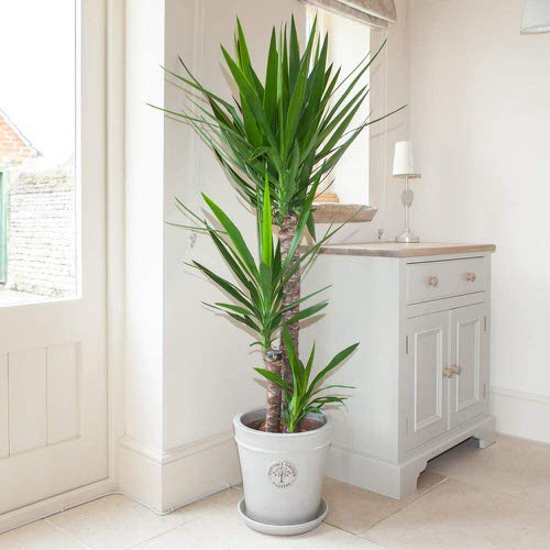 Houseplants You Can't Kill Even If You Want 9