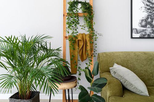 Pin Worthy Houseplant Pictures 14