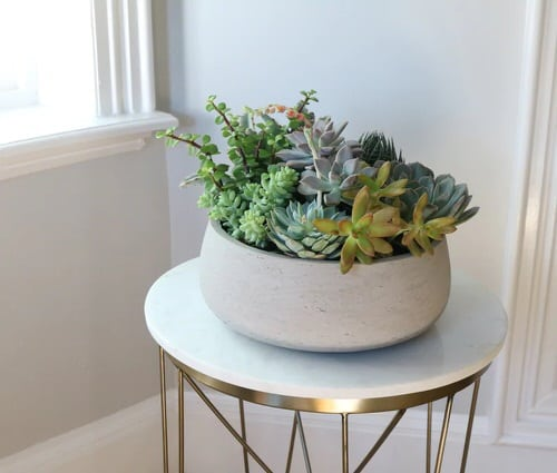 Table Decorating Ideas with Small Potted Houseplants 7