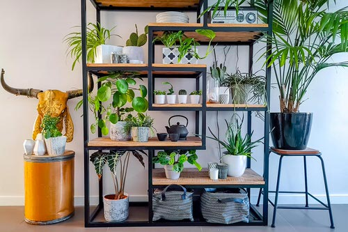 Plant Shelves Ideas 7