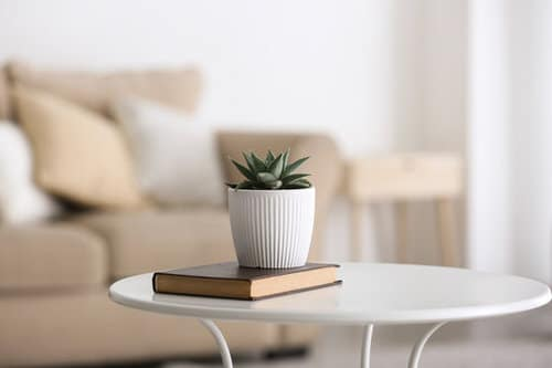 Table Decorating Ideas with Small Potted Houseplants 8