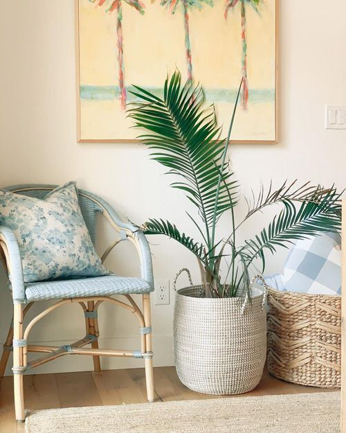 Tropical Indoor Plants Pictures and Ideas from Instagram 8