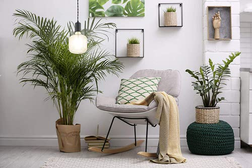 Pin Worthy Houseplant Pictures 15