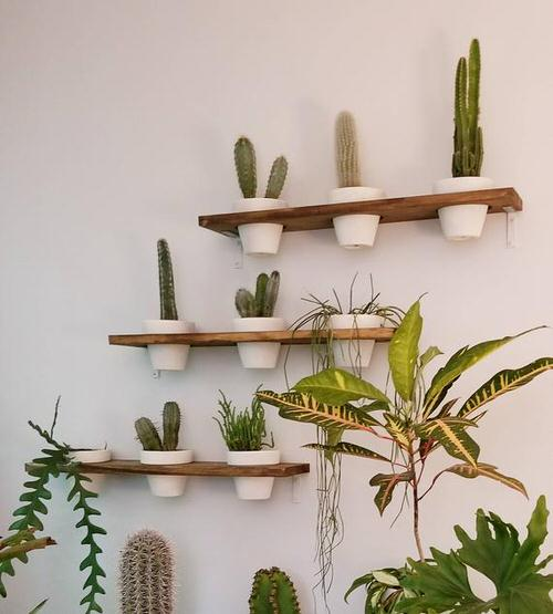 Plant Shelves Ideas 8