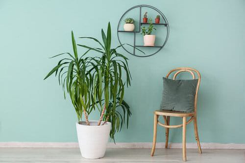 Pin Worthy Houseplant Pictures 16