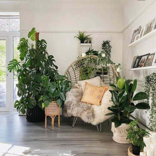 Moroccan Décor with Plants 10