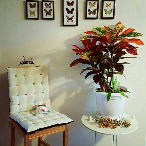 Tropical Indoor Plants Pictures and Ideas from Instagram 11