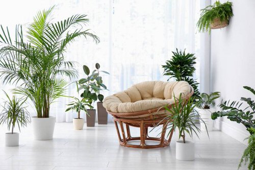 Pin Worthy Houseplant Pictures 10