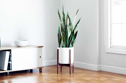Snake Plant Decoration Ideas 10