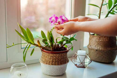 How to Water Orchids 3