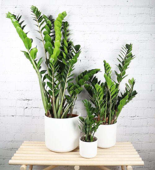 Houseplants You Can't Kill Even If You Want 2