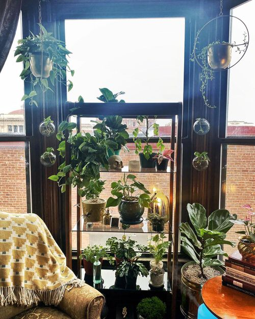 Tropical Indoor Plants Pictures and Ideas from Instagram 17
