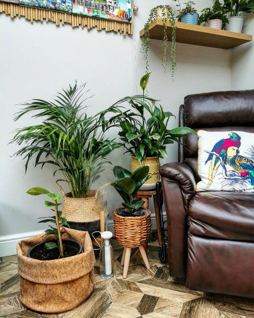 Tropical Indoor Plants Pictures and Ideas from Instagram 18