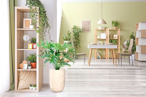 Pin Worthy Houseplant Pictures 2