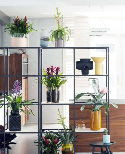 Tropical Indoor Plants Pictures and Ideas from Instagram 2