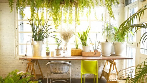 Indoor Plants Dining Room Décor Ideas 2