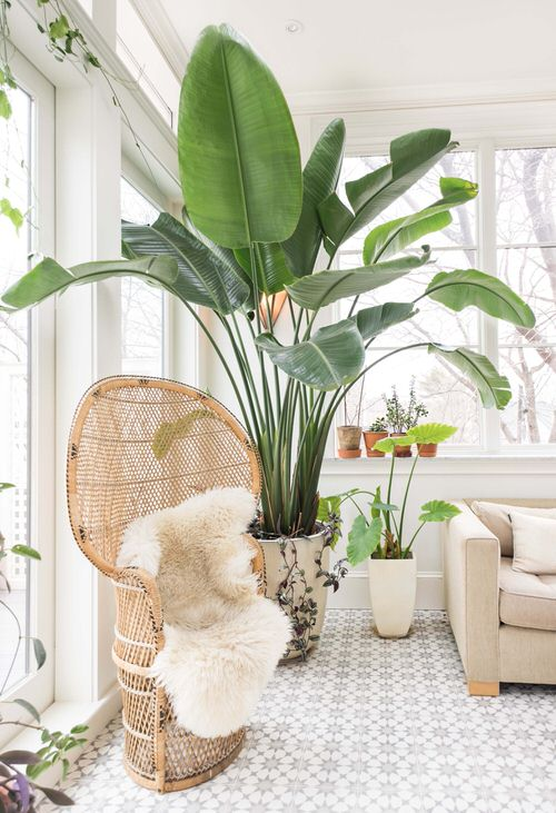 Bird of Paradise Types You Can Grow Indoors 3