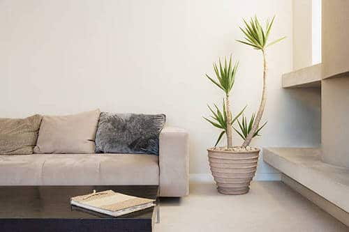Pin Worthy Houseplant Pictures