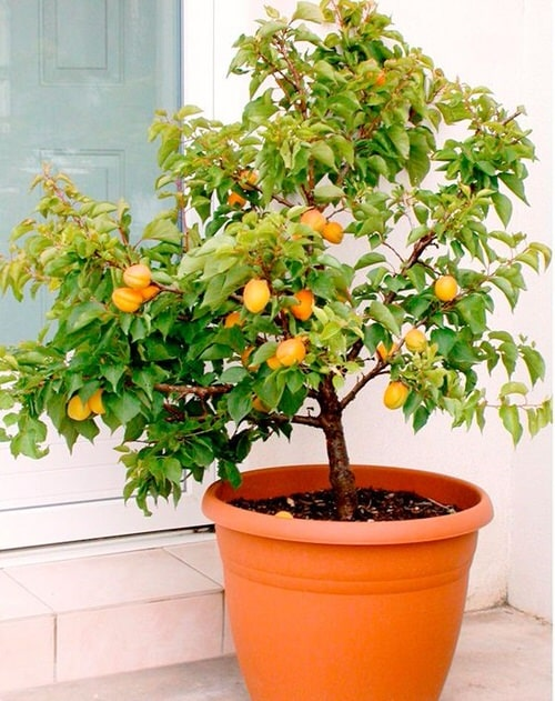 Fruits You Can Grow Indoors 3