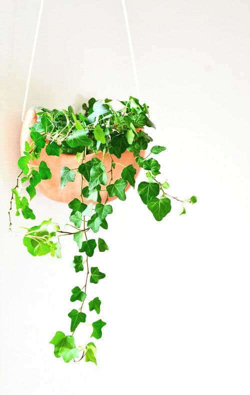 DIY Plant Hanger Ideas 3
