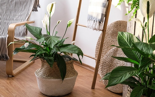 Pin Worthy Houseplant Pictures 32