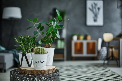 Pin Worthy Houseplant Pictures 20