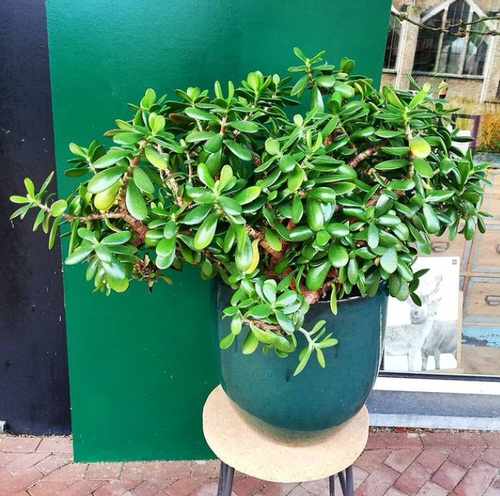 Houseplants You Can't Kill Even If You Want 4
