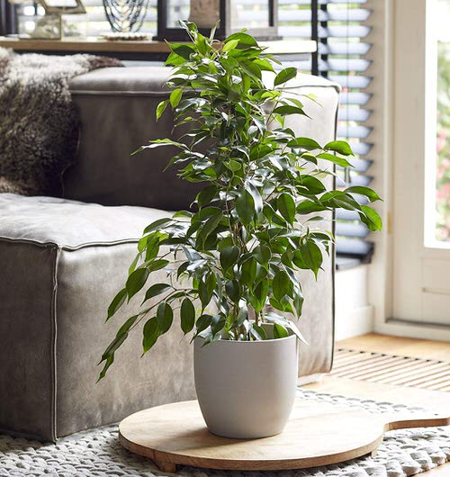 Best Houseplants for Stressed Out People 4