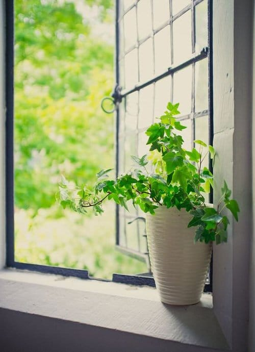 Pin Worthy Houseplant Pictures 36