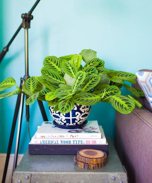 Pin Worthy Houseplant Pictures 40