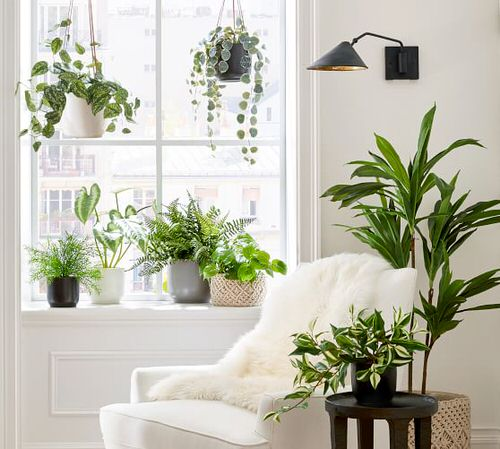 Pin Worthy Houseplant Pictures 19