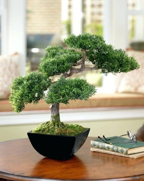 Table Decorating Ideas with Small Potted Houseplants 4