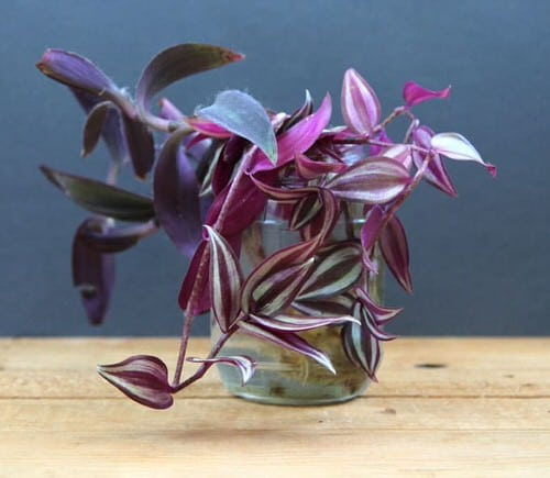 Indoor Plants You Can Grow in Glass Jars and Bottles 4