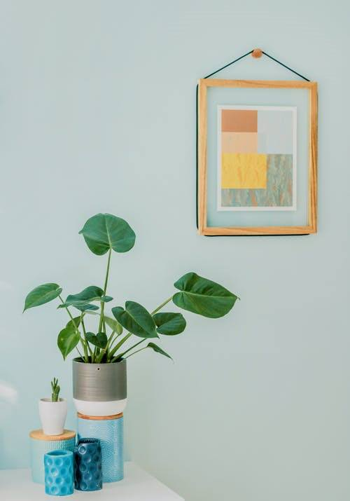 Pin Worthy Houseplant Pictures 41