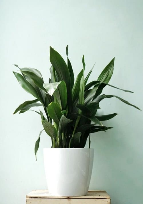 Houseplants You Can't Kill Even If You Want 8