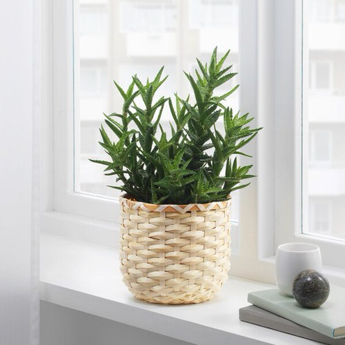 Pin Worthy Houseplant Pictures 46